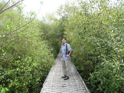 Mangrovep1190402